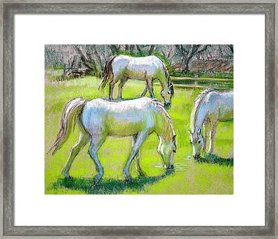 Framed Print featuring the painting White Horses Grazing by Sue Halstenberg