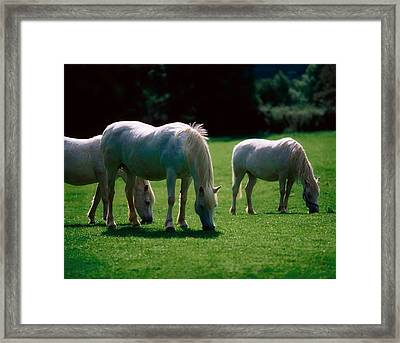 White Horses, Ireland Framed Print by The Irish Image Collection