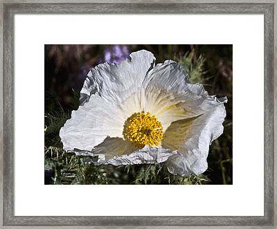 White Hot Framed Print
