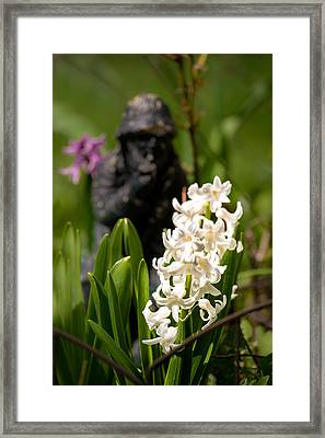 White Hyacinth In The Garden Framed Print