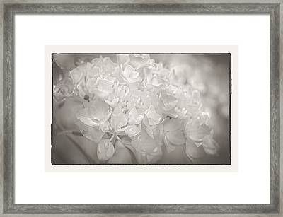 Framed Print featuring the photograph White Hydrangea by Craig Perry-Ollila