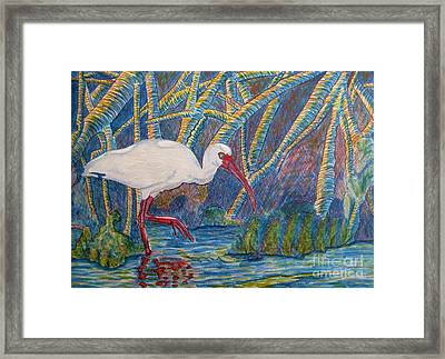 White Ibis In The Mangroves Framed Print by Judy Via-Wolff