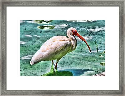 White Ibis On Lake Eola By Diana Sainz Framed Print by Diana Sainz