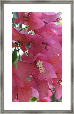 White In Pink Framed Print by Russell Smidt