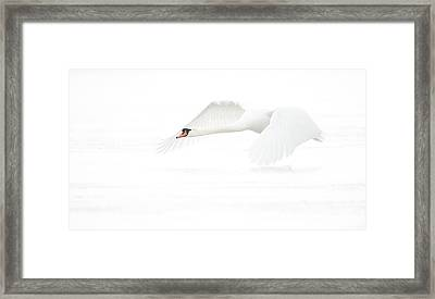 White In Withe (h) Framed Print by Jeanette Rosenquist