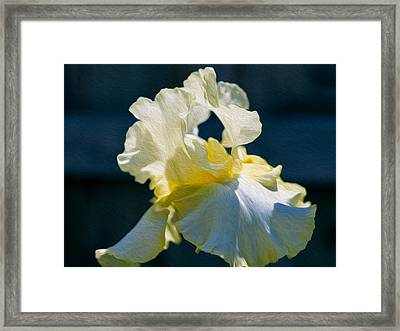White Iris With Yellow Framed Print by Omaste Witkowski
