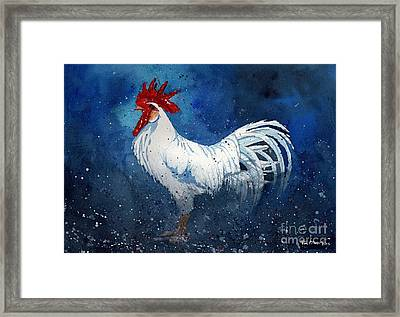 White Leghorn Framed Print by Tim Oliver