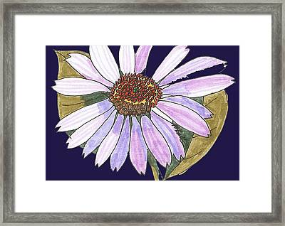 White Light Purple Aster Framed Print by Miriam Kalliomaki