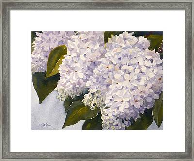 White Lilacs Framed Print by Janet  Zeh