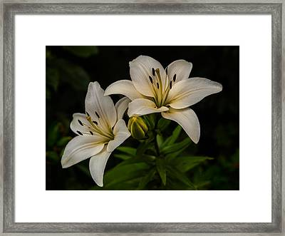 White Lilies Framed Print by Davorin Mance