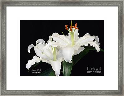 Framed Print featuring the photograph White  Lilies by Jeannie Rhode