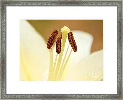 Framed Print featuring the photograph White Lily #2 by Lisa L Silva