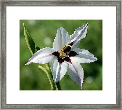 Framed Print featuring the photograph White Lily - A Beauty by Ellen Tully