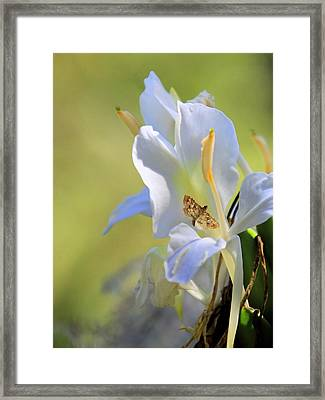 White Lily And The Skipper Framed Print by Rosalie Scanlon