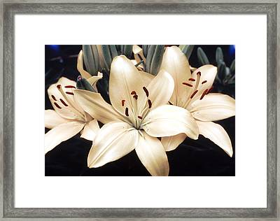 White Lily Beauty Framed Print