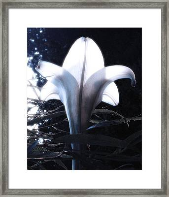 White Lily By Jan Marvin Framed Print