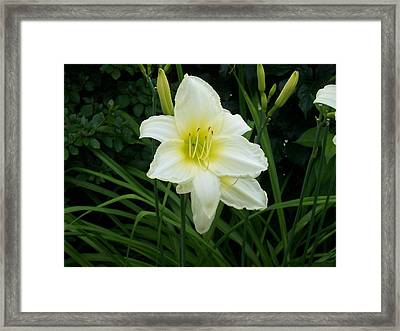 White Lily Framed Print by Catherine Gagne