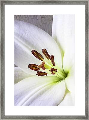 White Lily Close Up Framed Print