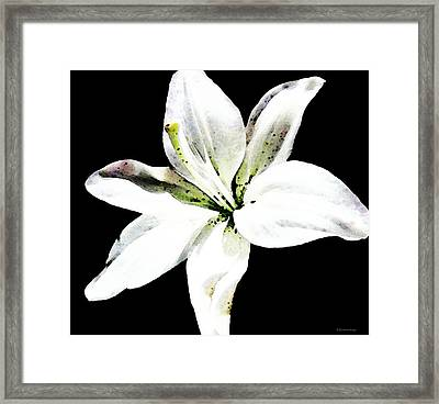 White Lily - Elegant Black And White Floral Art By Sharon Cummings Framed Print by Sharon Cummings