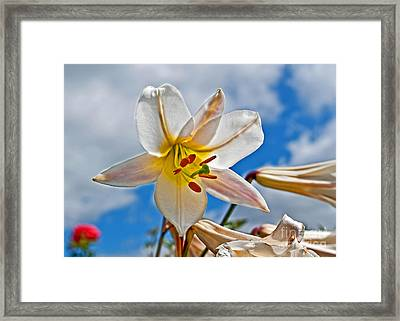 White Lily Flower Against Blue Sky Art Prints Framed Print