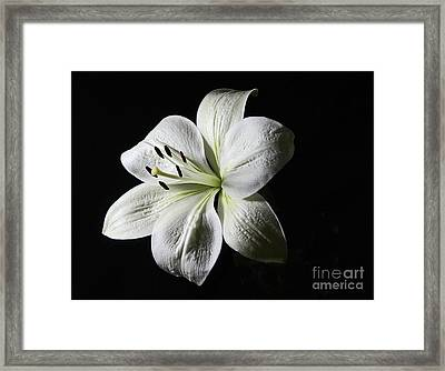 White Lily - Liliaceae Framed Print by Dog Photos