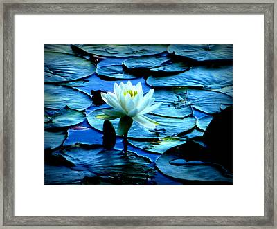 White Lily Framed Print by Maria Scarfone