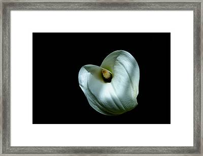 Framed Print featuring the photograph White Lily by Marwan Khoury