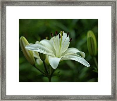 White Lily Framed Print by Sandy Keeton