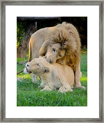 How About A Nibble My Love Framed Print
