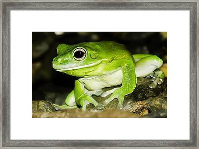 White-lipped Tree Frog Framed Print by Mr Bennett Kent