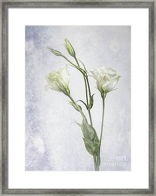 White Lisianthus Flowers Framed Print by Shirley Mangini