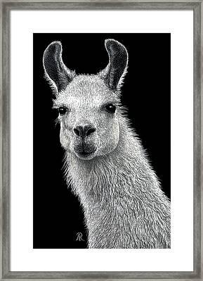 White Llama Framed Print