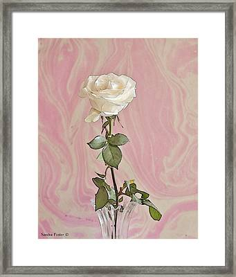 Framed Print featuring the photograph White Long Stemmed Rose by Sandra Foster