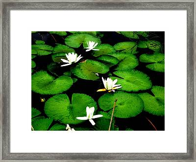 White Lotus Framed Print by Ali Mohamad