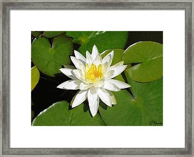 White Lotus 1 Framed Print by Ellen Henneke