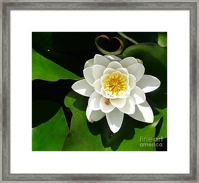 White Lotus Heart Leaf  Framed Print by Nora Boghossian