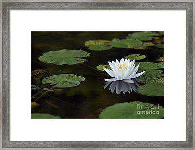 Framed Print featuring the photograph White Lotus Lily Flower And Lily Pad by Glenn Gordon