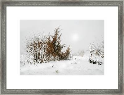 White Magic Framed Print by Diana Angstadt