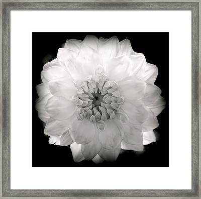 White Magic Framed Print by Karen Wiles