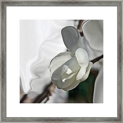 White Magnolia Series 510 Framed Print