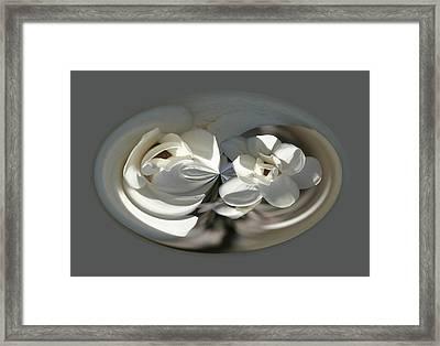 White Magnolia Series 511 Framed Print