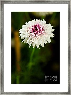 White Mesh Framed Print by Syed Aqueel
