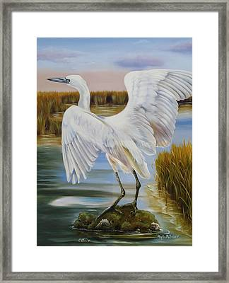 White Morph Reddish Egret At Creole Gap Framed Print