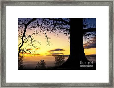 White Oak At Sunrise Framed Print by Thomas R Fletcher