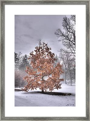 White Oak In Fog Framed Print by Ed Cilley