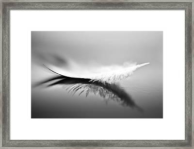 White Framed Print by Olinda Coutinho