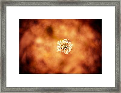 White On Orange Framed Print