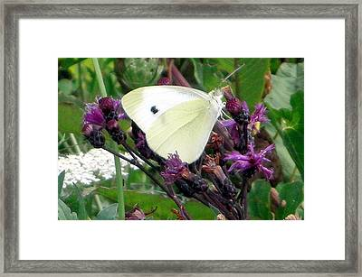 White On Purple On Green Framed Print by Robert Lance