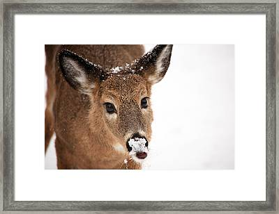 White On The Nose Framed Print