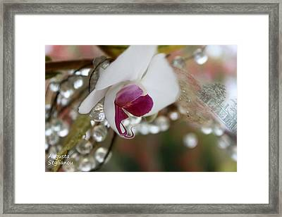 white Orchid and Crystals Framed Print